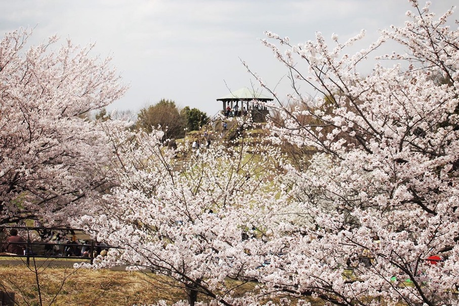 四季の森公園(中山エリア)