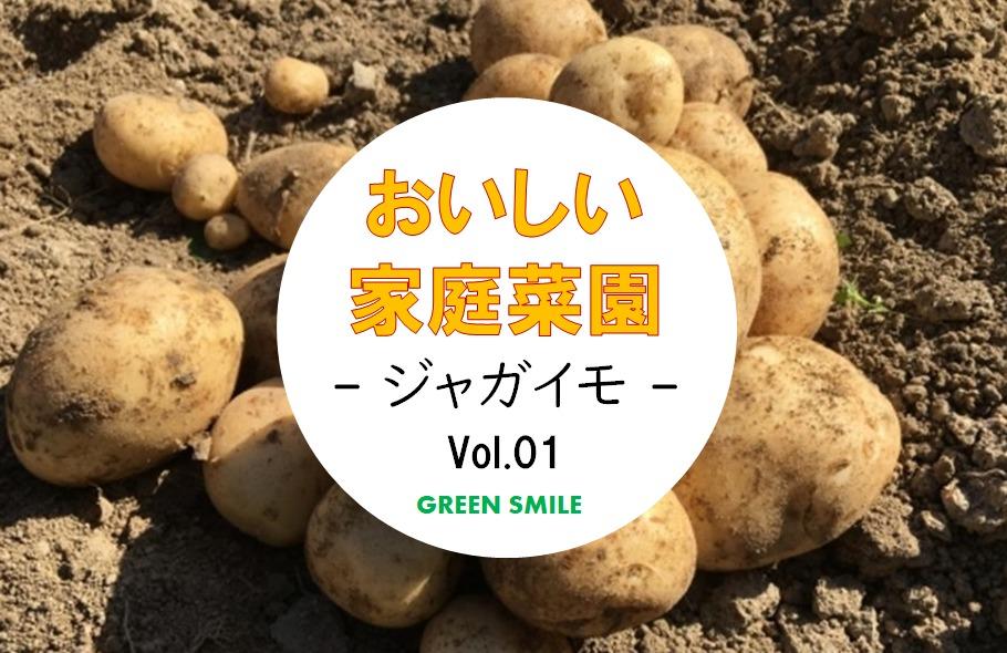 【楽しい家庭菜園 Vol.1】家庭菜園の人気者!ジャガイモの種類や特徴まとめ!!<春ジャガ>