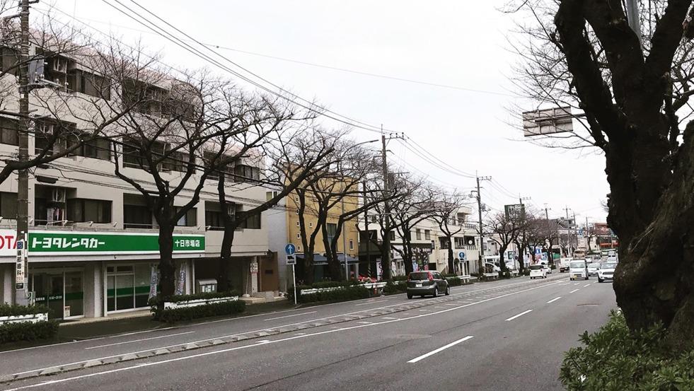 環状4号線 桜並木(霧が丘エリア)