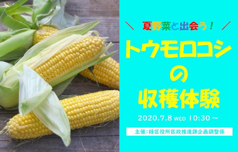 【7月8日】夏野菜と出会う!「トウモロコシの収穫体験」開催!!<緑区鴨居エリア>