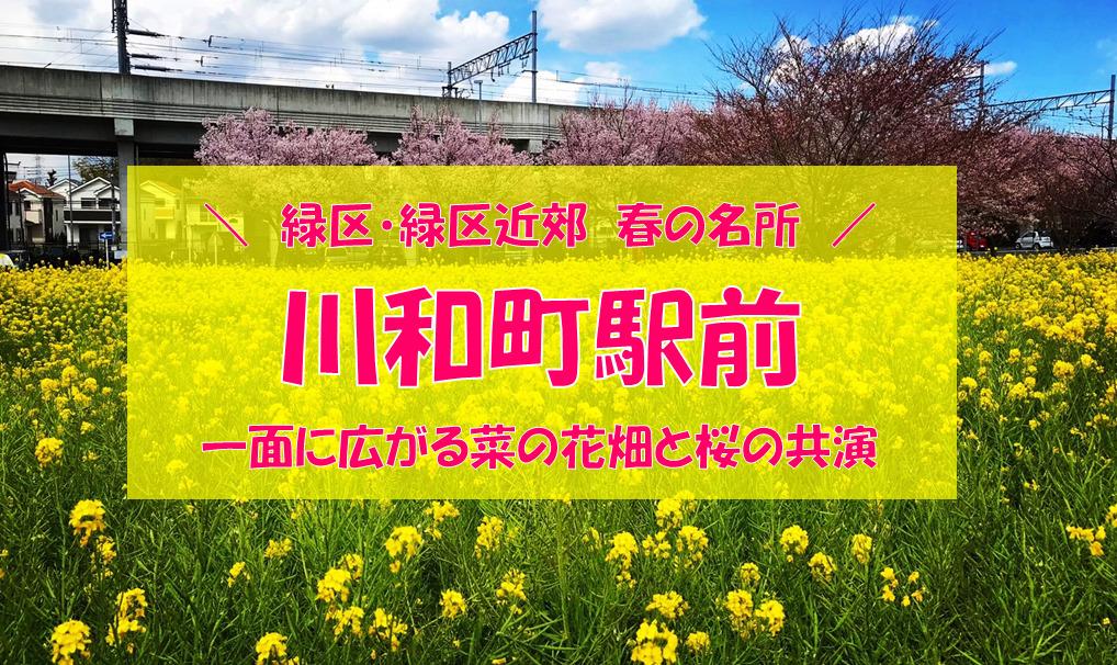 【緑区近郊の春の名所】「川和町駅前 菜の花畑」<緑区近郊エリア>