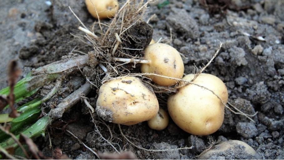 【緑区の農業を体験♪】2021年6月開催!植え付け収穫体験情報まとめ!!<横浜市緑区>