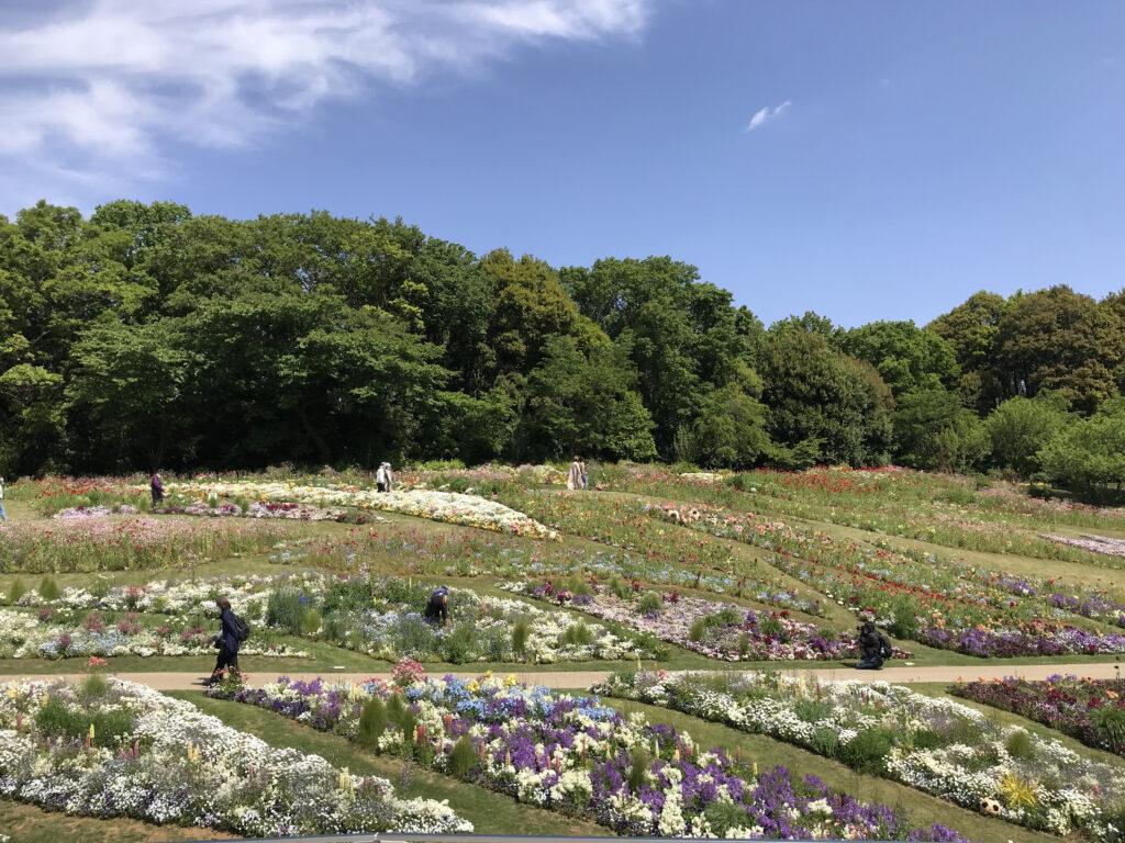 【大花壇を堪能!】「里山ガーデンフェスタ2021」の訪問レポート!