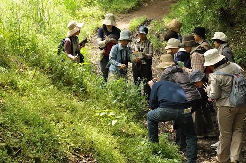 にいはる里山交流センター「旬の里山探訪~俳句の情景を森で探そう」