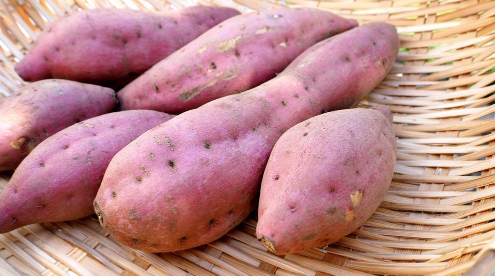 新治恵みの里「サツマイモ収穫体験」